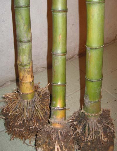 昆虫芦苇手工制作步骤